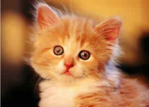 Проход для кота в двери своими руками, Кошачий мир