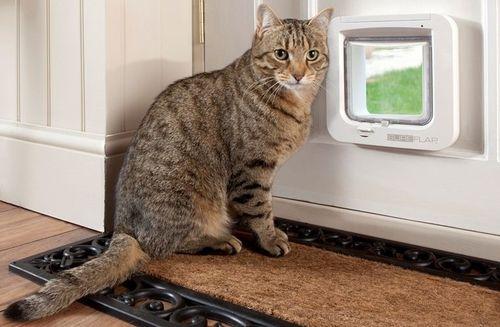Делаем дверь для кошки своими руками