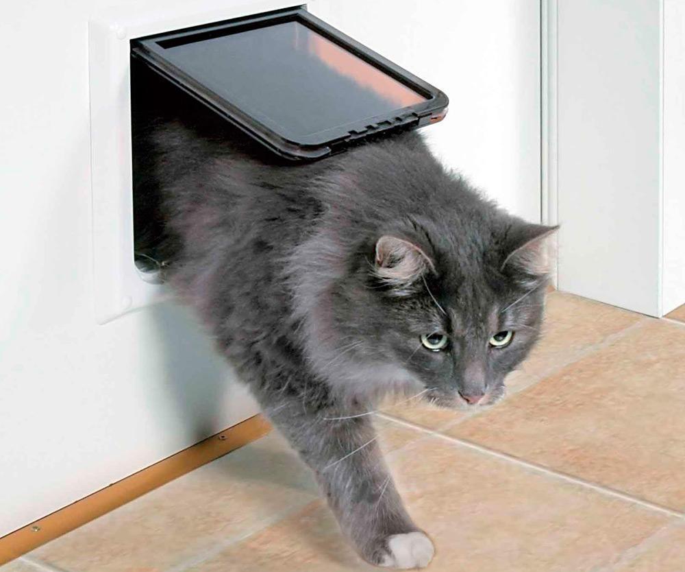 серая кошка проходит через дверцу