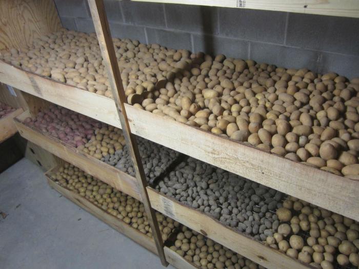 Как хранить овощи в погребе