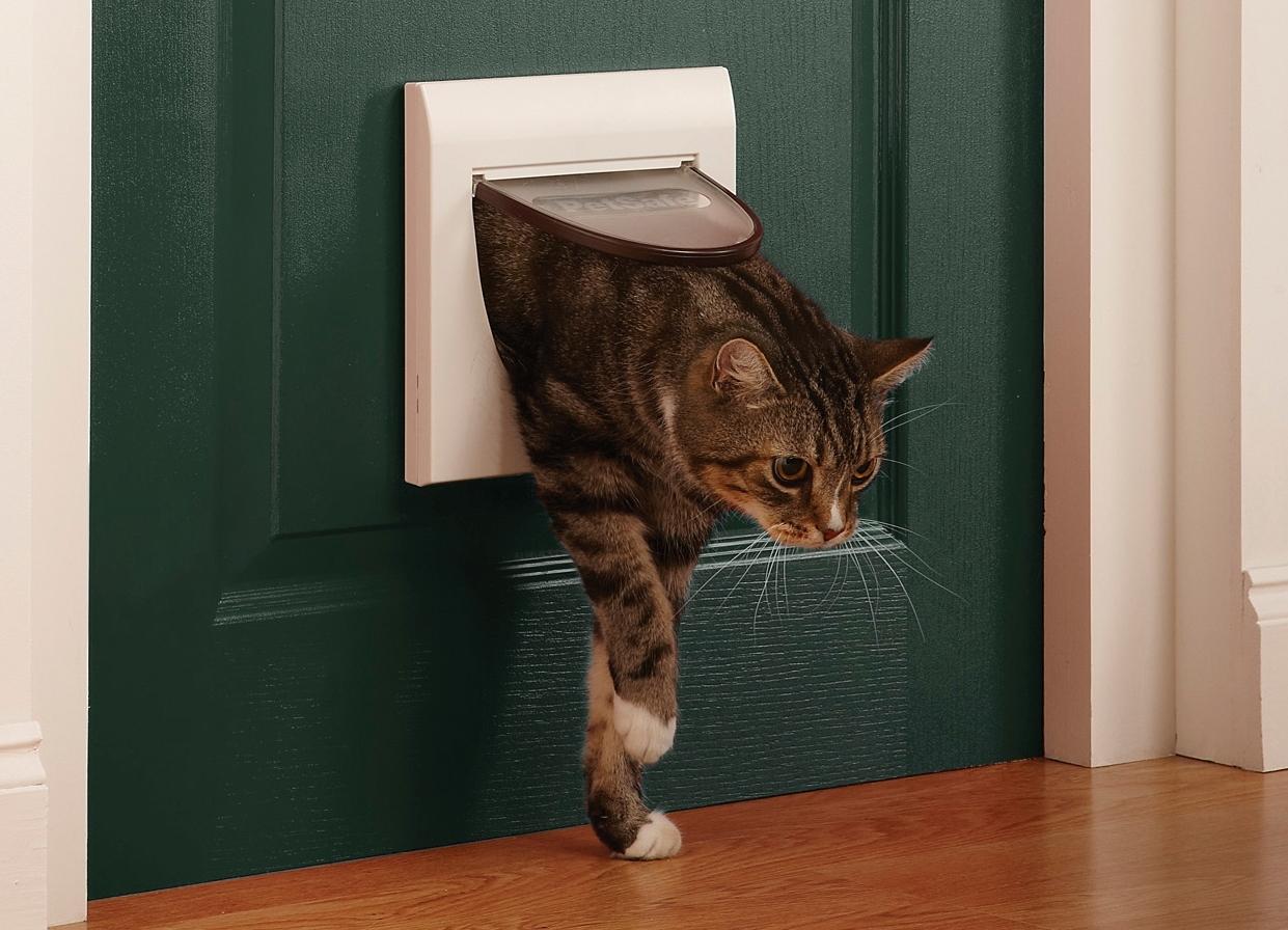 кошка проходит через окошко в зелёной двери