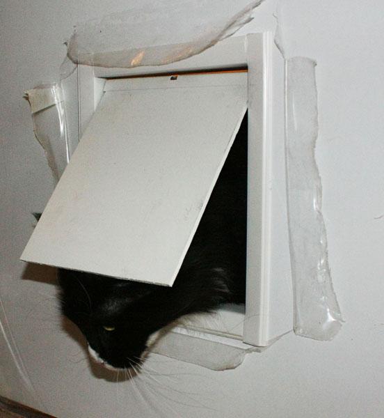 Туалетная дверь для кота