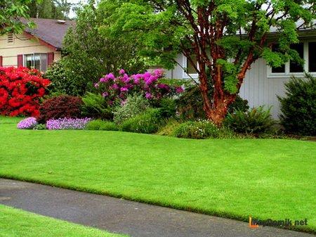 Как оформить лужайку перед домом – создаем зеленую площадку с цветниками и клумбами