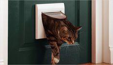 Как сделать дверь для кошек