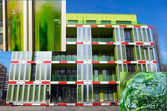 3.  Новые технологии в строительстве - альтернативная энергия водорослей