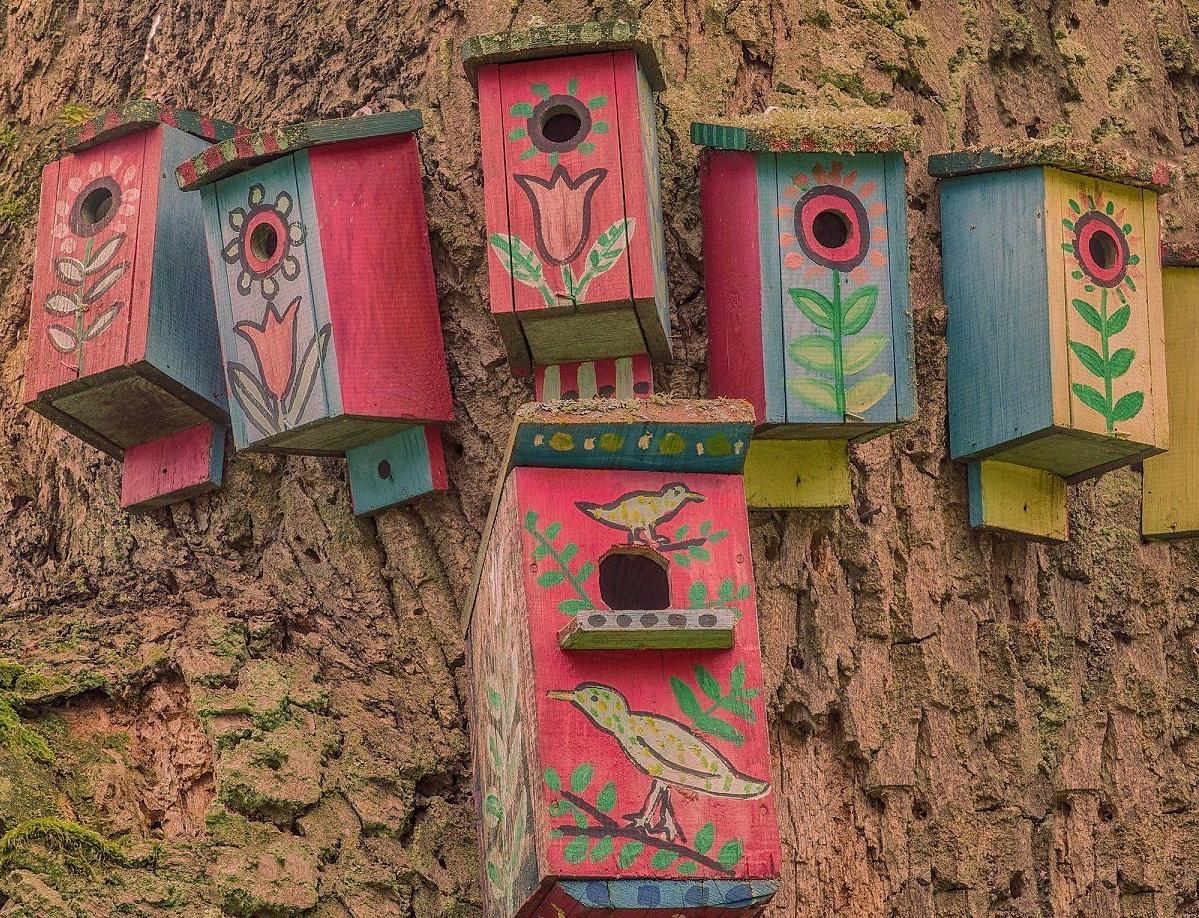 Шесть скворечников на одном дереве