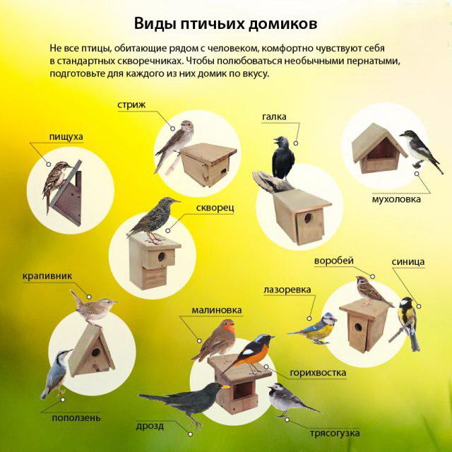 Виды домиков для птиц