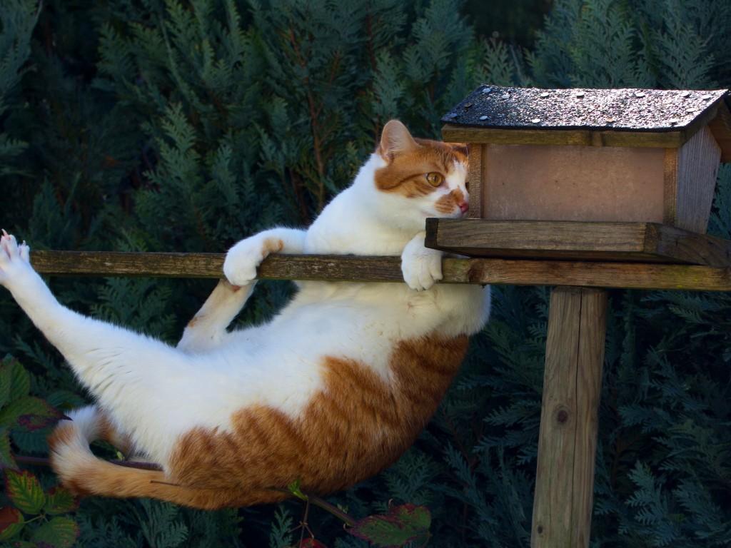 Кот и скворечник