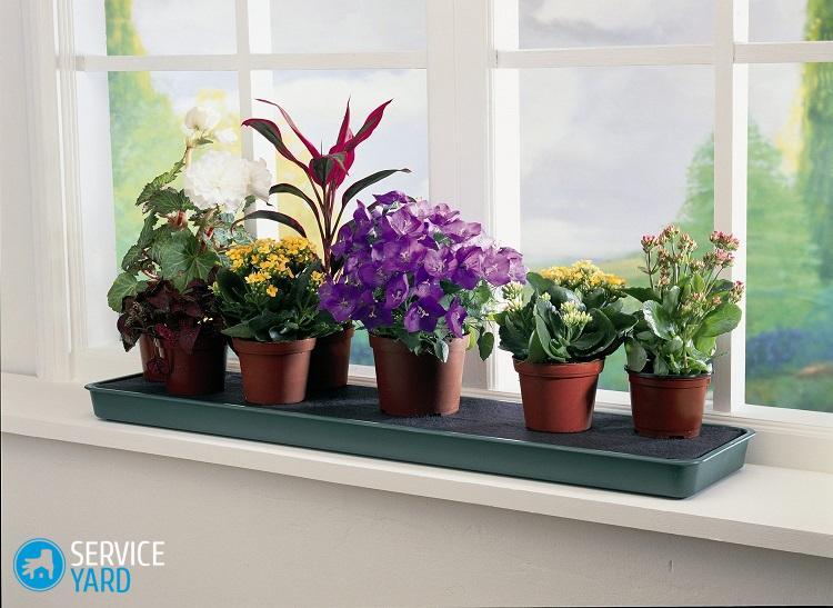 Как разместить комнатные цветы в квартире?